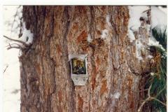 Перевал Дятлова в 1999 году